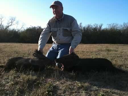 Texas Wild Hog Hunts