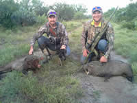 Two Javelinas in South Texas